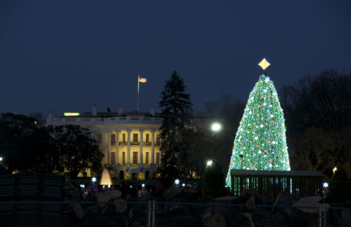 Photographic Opportunity – The Lighting of the National Christmas Tree