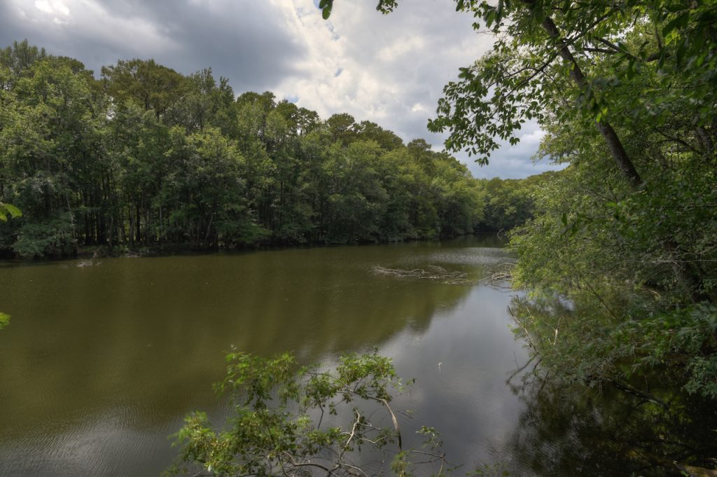 Weston Lake, Congaree National Park