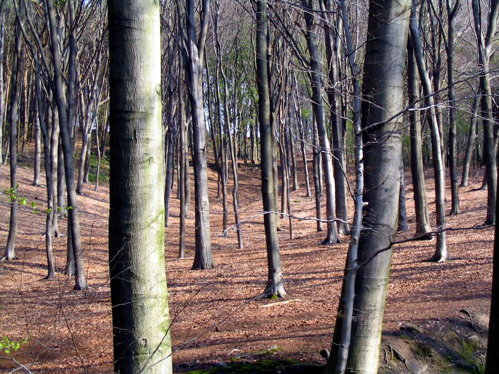 Schinnen Forest